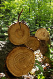 Tree  oak  cut Stock Images