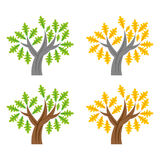 Tree3. Oak tree illustrations with summer and autumn color leaves Royalty Free Stock Photo