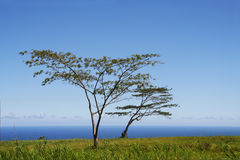 Tree by the ocean Stock Images