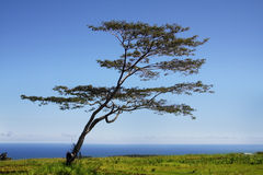 Tree by the ocean Stock Photography