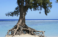 Tree and ocean. Tree at the shore of the ocean royalty free stock image