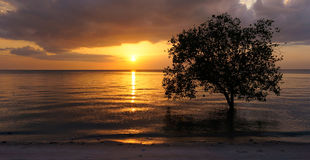 Tree in the ocean on a sunset beach. Tree in the ocean during tide on the beach at sunset Stock Image