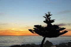 Tree and ocean in Sunset from Camps bay Royalty Free Stock Photography