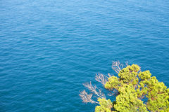 Tree and Ocean Royalty Free Stock Photo