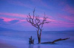 Tree in the Ocean Waters of Maui Hawaii in Long Exposure. This dead tree is planted in the ocean sand in Maui Hawaii. It is done in long exposure and has a pink royalty free stock photos