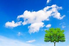 Tree- och blåttsky royaltyfri foto