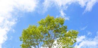 Tree- och blåttsky Royaltyfri Bild