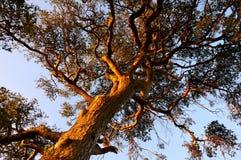 Tree- och blåttsky arkivfoto