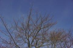 Tree- och blåttsky arkivfoton