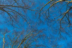 Tree- och blåttsky arkivbilder