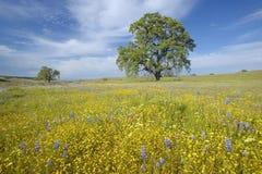Tree och färgrika fjäderblommor Royaltyfri Foto