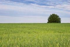Tree och grönt fält av oats Fotografering för Bildbyråer