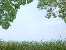 Naturbakgrund Arkivbilder