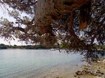 Tree och hav Arkivbild