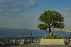 Tree och hav Arkivbilder