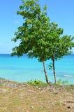 Tree och hav Fotografering för Bildbyråer