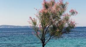 Tree och hav Royaltyfri Fotografi