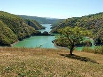 Tree och lake Arkivfoton