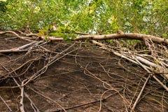 Tree och leaf Fotografering för Bildbyråer