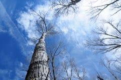 Tree och Sky Royaltyfri Fotografi