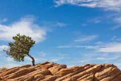 Tree och sky arkivbild