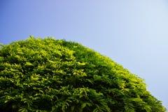 Tree och sky Fotografering för Bildbyråer