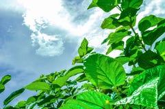 Tree och sky Arkivfoto