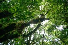 Tree och sky Royaltyfria Bilder