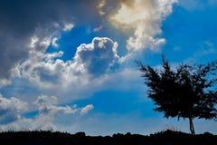 Tree och sky royaltyfria foton