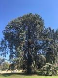 Tree och sky Arkivbilder