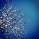 Tree och skyen Arkivfoton
