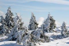 Tree och snow Fotografering för Bildbyråer