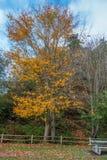 Tree och staket fotografering för bildbyråer