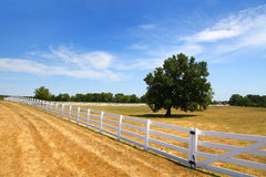 Tree och staket arkivfoton