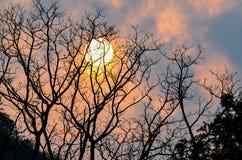 Tree och sun Royaltyfri Bild