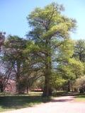 Tree och sun Royaltyfri Fotografi