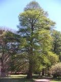 Tree och sun Arkivbild
