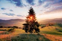 Tree och sun arkivbilder