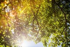 Tree och Sunen Arkivfoto
