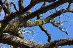 Tree och Sunen Royaltyfri Fotografi