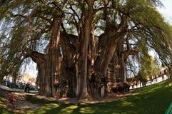 Free Tree Of LIfe (fish Eye) Royalty Free Stock Photo - 23450255