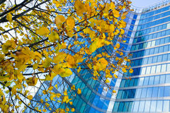 Tree in office building. An autumn tree in office building, blue and yelow Royalty Free Stock Image