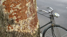 Tree and the old bike Royalty Free Stock Photography