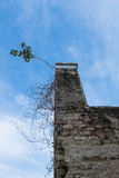 Tree on old brick chimney and blue sky Royalty Free Stock Image