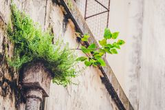 Tree on Old Building Concrete royalty free stock photos