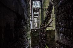 Tree in the old factory ruins Royalty Free Stock Photography