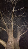 Tree. An old fashion white tree at night Royalty Free Stock Photography