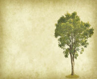 Tree with old grunge antique paper Royalty Free Stock Photos