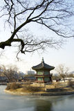 The tree and old tower in winter. In Korea,waterside Royalty Free Stock Image