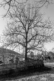 Tree in old vilage Bozhenci in Bulgaria Royalty Free Stock Photos